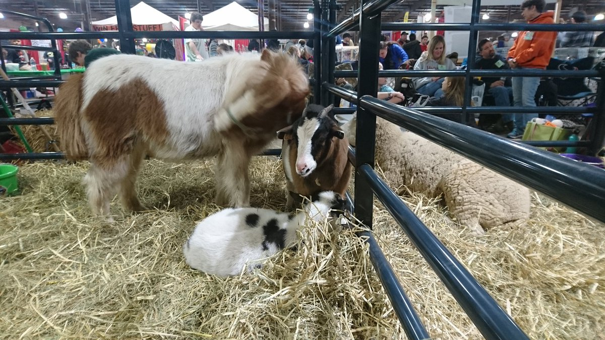 farm animals at a pet expo, including goats and miniature horse